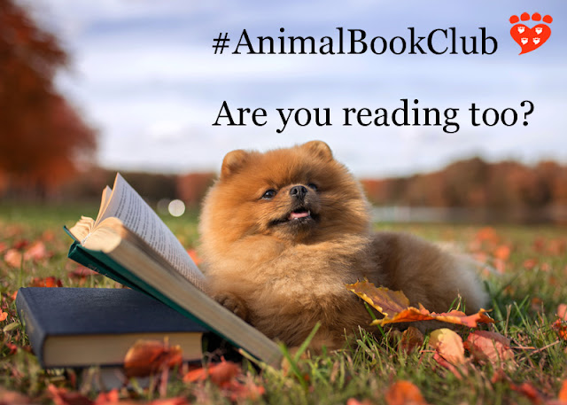 Pomeranian reading outdoors in Autumn because the book club choice is Plenty in Life is Free