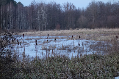 szlak niebieski z Zaborowa Leśnego do Małego Truskawia