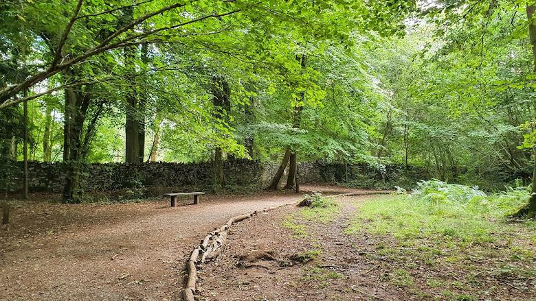 Leigh Woods 真的是茂密的森林