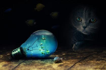 Kamu Wajib Tahu, Apakah Kucing Termasuk Hewan Karnivora Atau Bukan ?
