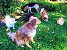 Dog Gum Treatment Natural Or Herbs