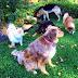 Ottawa Valley Dog Whisperer Turmeric And Curcumin Good