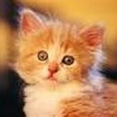 Nama Kucing Betina Dan Jantan Paling Bagus Bangpurba Com