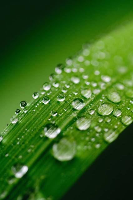 Dew Drops Wallpapers in 4K - Pics Directory