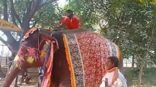 ramdev-fall-from-elephant