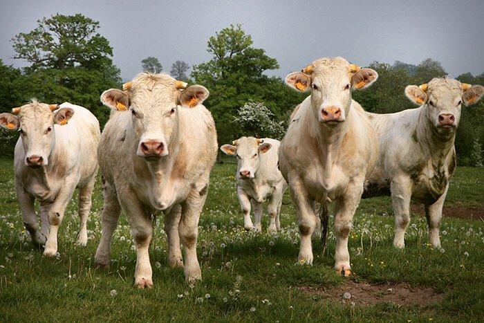 dejar-de-comer-carne