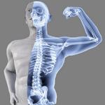 bones in spanish
