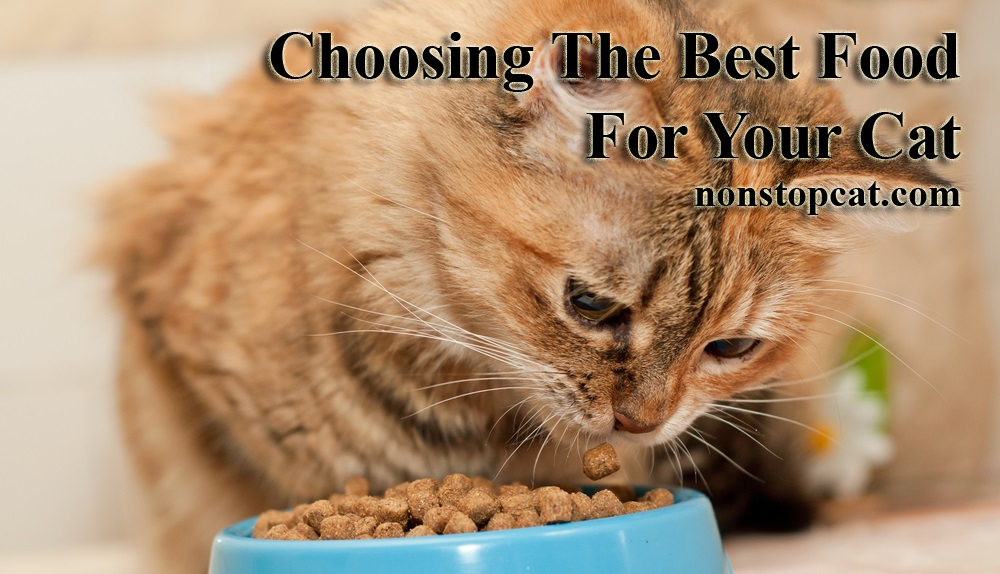 Choosing The Best Food For Your Cat