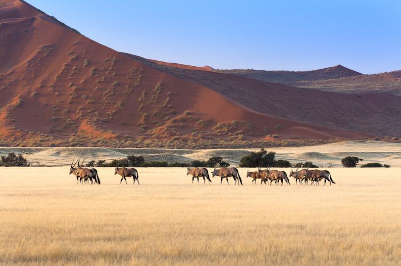اجمل حدائق ناميبيا