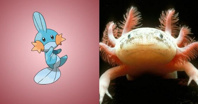 Pokemon-Mudkip-hewan-langka-Axolot