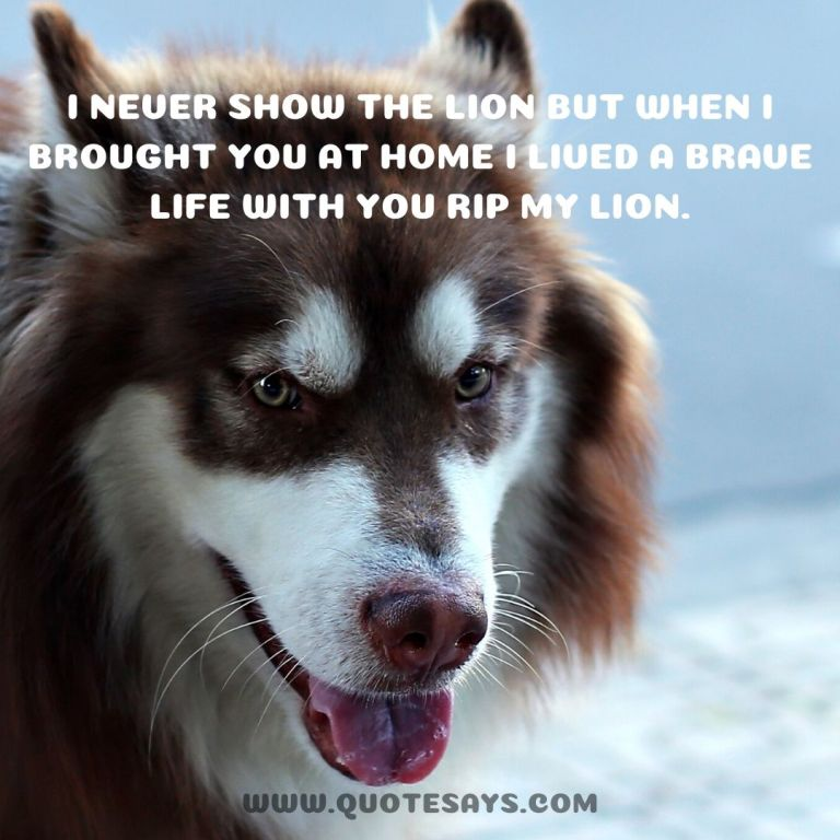 Quotes when dog dies, Quotes for dog when dog passed away