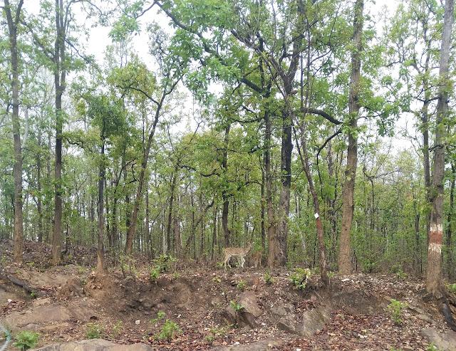 Achanakmar Amarkantak Biosphere Reserve