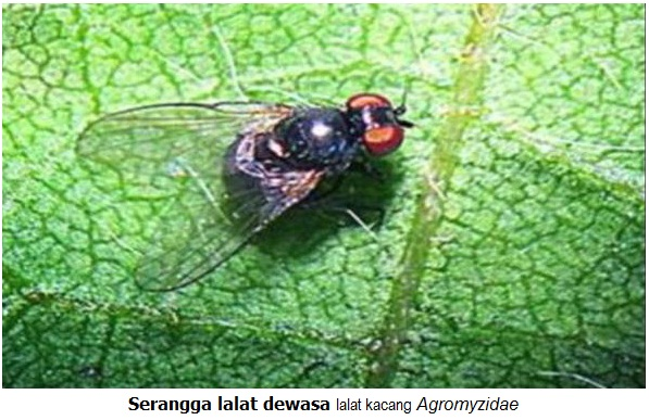 Pestisida Yang Digunakan Untuk Mengendalikan Hama Ulat Batang Pada Kedelai