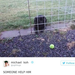 dumb dog useless fence