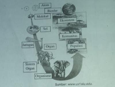 Permasalahan Biologi dan Tingkatan Organisasi Kehidupan