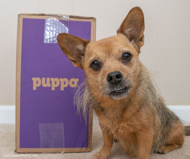 Jada and a puppo dog food box