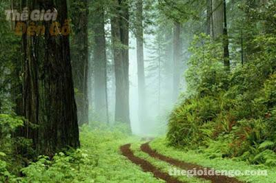 Thế Giới Đèn Gỗ - Gỗ tự nhiên là gỗ gì? Ưu, nhược điểm của gỗ tự nhiên