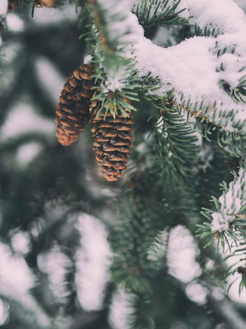 Two Pine Cones | Aaron Burden via Unsplash