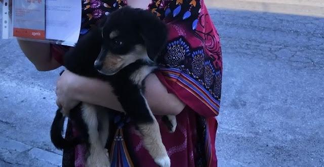 """Η μικρή """"Κάρυ"""" ταξίδεψε από το Ναύπλιο στο Κερατσίνι για να βρει τη νέα της οικογένεια"""