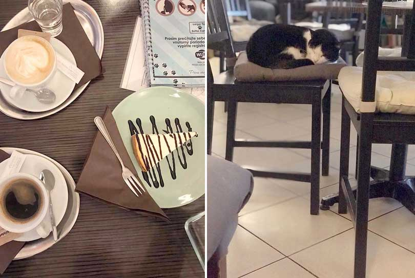 Mačkafé cat café, coffee cakes
