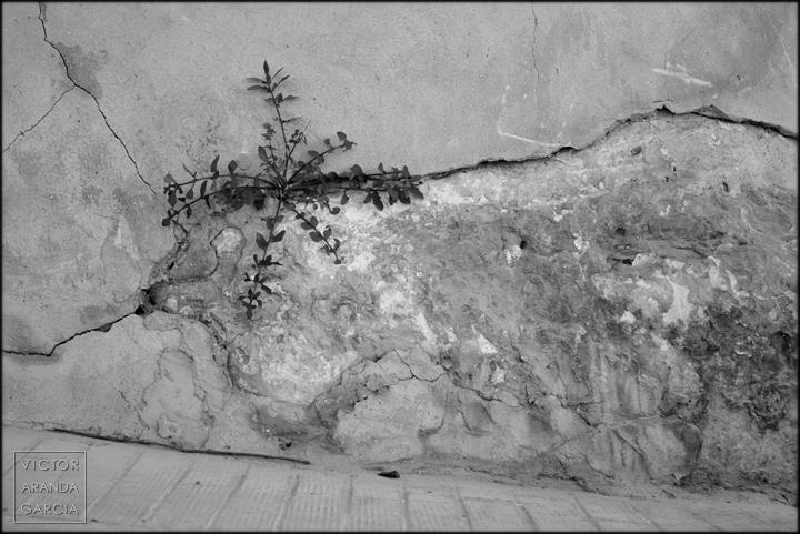 serie,arte,naturaleza,muro,limites,planta