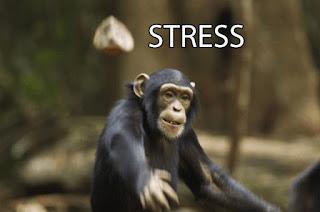 STRESS MONYET LEMPAR BATU