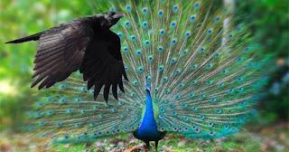 μεγάλο πουλί γαμημένοι άνδρες