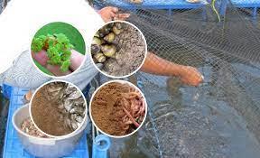 9 Pakan Alternatif Ikan Lele