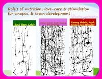 Nutrisi Seimbang Stimulasi Tepat Tumbuh Kembang Otak Optimal