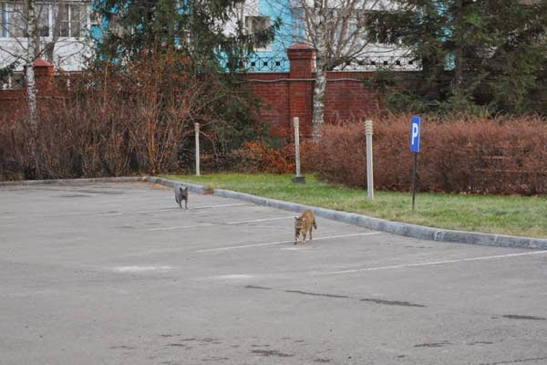 cats walking