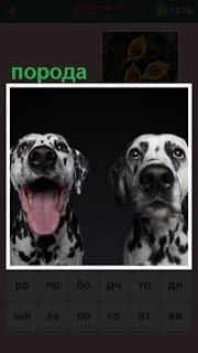 сидят две породистые собаки с высунутым языком