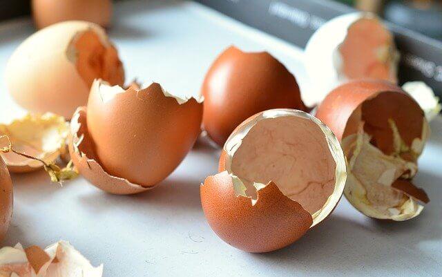 فوائد قشرة بيض الدجاج للطيور Benefits of eggs for birds Eggs
