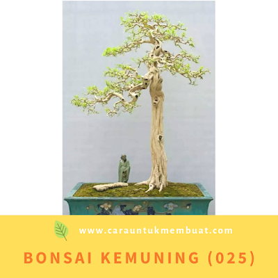 Bonsai Kemuning (025)