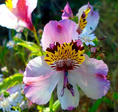 Άνθη κερασιάς που χρονολογούνται από τον κωδικό προσφοράς