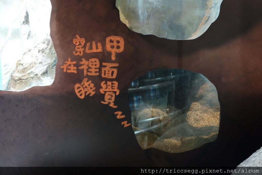 台北動物園(7).jpg