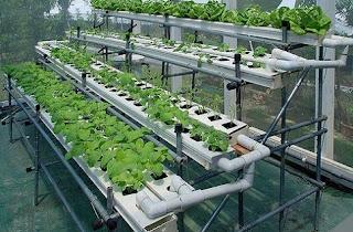 cara menanam hidroponik dengan botol bekas,cara menanam bayam secara hidroponik,cara menanam hidroponik dengan media air,cara menanam kangkung hidroponik,cara menanam bayam dalam polybag,