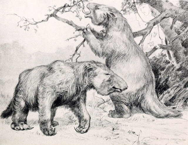 Two Megatherium americanum are seen eating from and around a tree. One is standing on two feet, feeding from a branch, and the other is walking in the foreground. Produced and published in 1913 by Robert Bruce Horsfall
