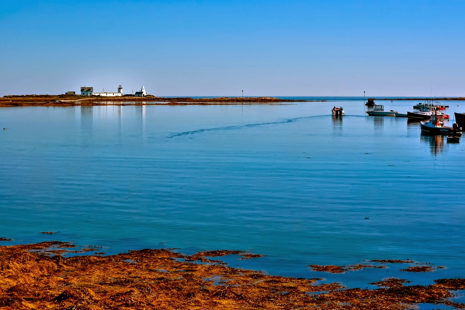 Goat Island Lighthouse, Rhode Island Postcard   Zazzle  Goat Island Lighthouse