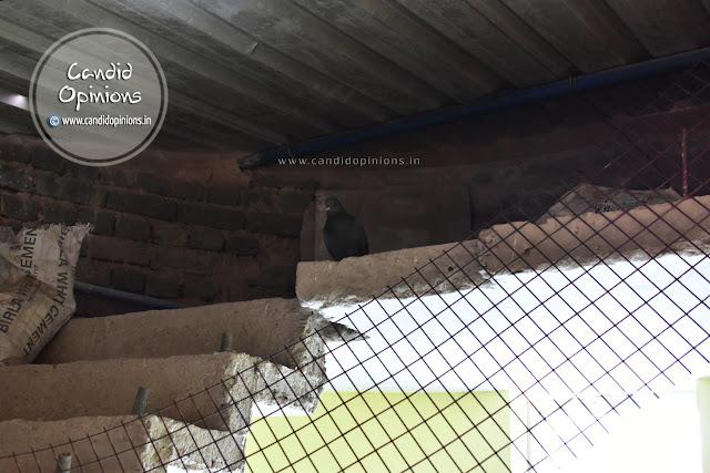 Pigeons seeking a safe haven