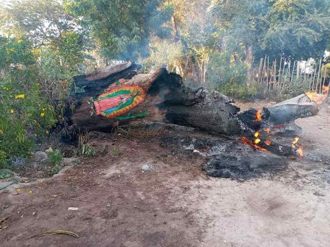 A imagem gravada na casca da árvore estava intacta