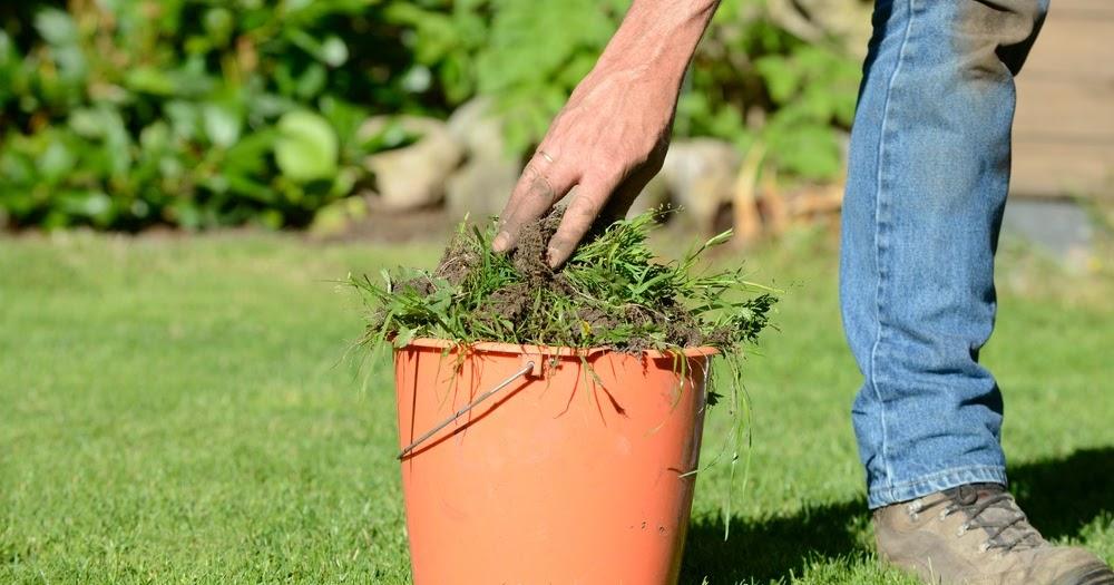 Eliminar las malas hierbas de forma natural amigos de la for Como quitar la mala hierba del jardin