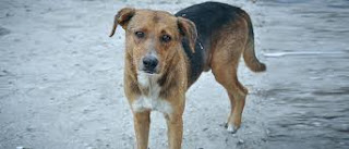 गल्ली का कुत्ता  - Gully Ka Kutta - Emiway Bantai