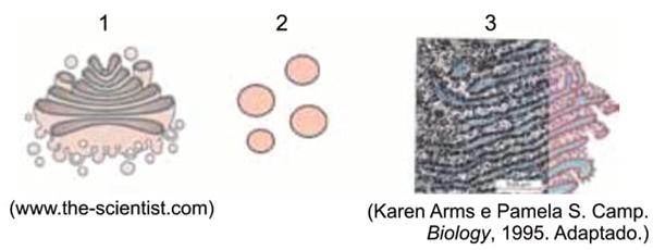 As imagens representam três organelas encontradas numa célula secretora de enzimas