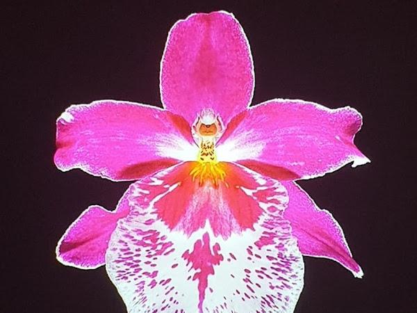 De la sexualité des orchidées de Sofia Teillet