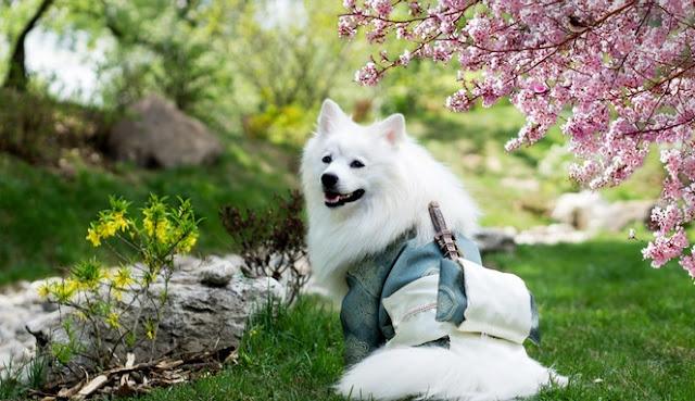 Qithmir, Kisah Seekor Anjing Yang Dijamin Allah SWT Masuk Syurga