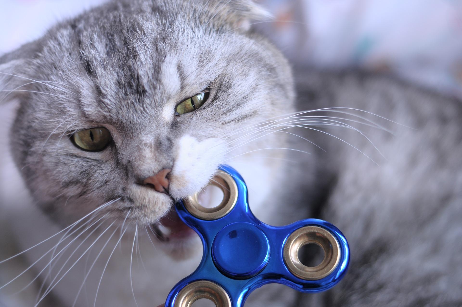 Pourquoi les Chats mordent ils?
