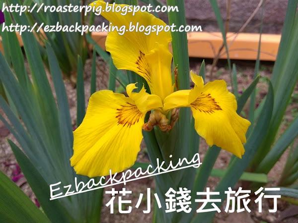 市區紫藤賞花好去處+香港花展2021櫻花庭園(4月14日更新)