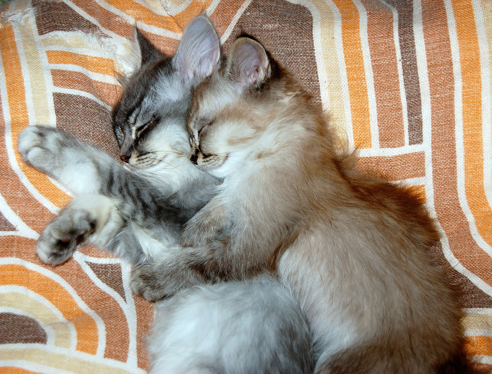 Socialize Your Kitten