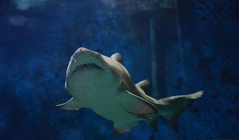 A cápatartásról tanácskoznak a világ tengerbiológusai a Nyíregyházi Állatparkban