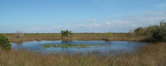 Laguna en los Everglades